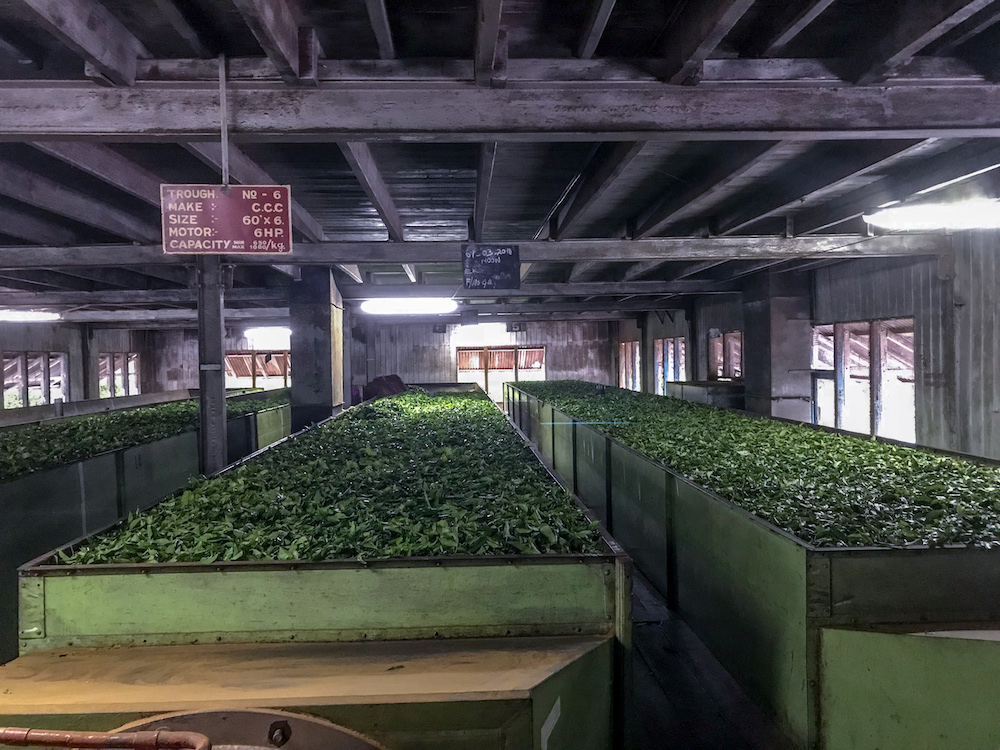 Invertek helps brew up efficiencies in Sri Lanka's tea industry